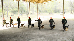 Demonstration of military dogs Stock Footage