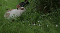 Rabbit eats grass on the meadow - stock footage