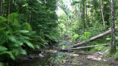 Rain forest in Mission Beach in Queensland, Australia. Stock Footage