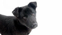 Black dog - puppy on a white background Stock Footage
