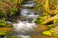Stock Photo of mountain stream on a spring morning