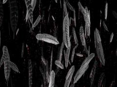 Magical birds feathers animated background Stock Footage