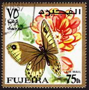 postage stamp showing a butterfly - stock photo