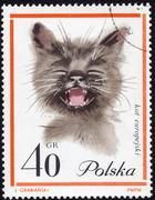 polish postage stamp showing a european cat - stock photo
