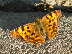 A brown butterfly on sunlit stones Stock Photos