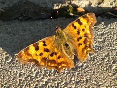 A brown butterfly on sunlit stones - stock photo