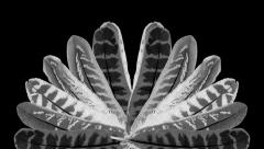 Bird Feathers animated background Stock Footage