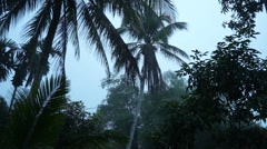 Peaceful Green Coconut Trees Surrounding In Asian Village - stock footage