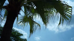 Sway Moving Palms Leaves On A Sunny and Windy Day - stock footage