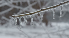 Frozen forest Stock Footage