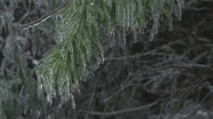 Trees covered in ice - stock footage