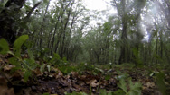 Stock Video Footage of Rain and hail in the deciduous forest. Full HD