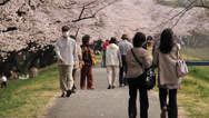 Stock Video Footage of Cherry Blossom Park