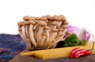 Stock Photo of italian pasta and mushroom sauce ingredients