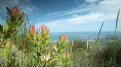 Fynbos blowing in the wind Stock Footage
