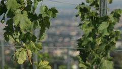 Vineyards of Europe, Austria winemaking industry. Stock Footage