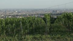 Wine industry in Europe . Vineyards in the vicinity of Vienna.Sequence Stock Footage