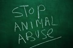 stop animal abuse - stock photo