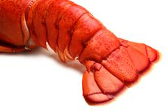 .lobster tail Stock Photos
