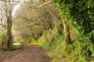 Stock Photo of pathway. co.cork, ireland. park road with trees.