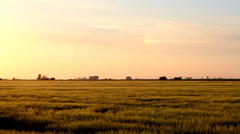 Green field in sunset. Stock Footage