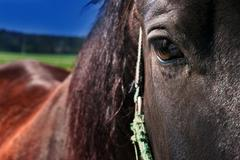 brown horse - detail of the head with a sincere look - stock photo