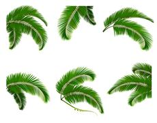 Stock Illustration of set green branches with leaves of palm trees. vector.