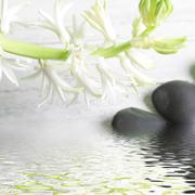 pretty spray of white spring flowers over water - stock photo