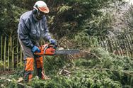 Stock Photo of professional gardener using chainsaw