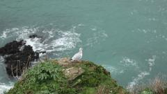 Seagull on clifftop Stock Footage