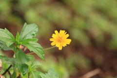 Stock Photo of yellow flower in forrest.