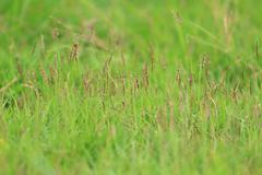 Fresh thick grass flowers, selective focus. Stock Photos