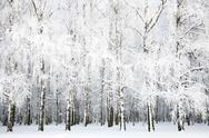 Stock Photo of russian winter in january