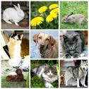 Stock Illustration of collage of animals - cat, dog, rabbit