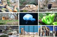 Stock Illustration of different animals at the berlin zoo germany
