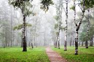Stock Photo of morning birch grove in deep autumn fog
