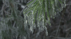 Icy spruce branch Stock Footage
