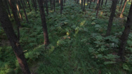 Stock Video Footage of Ferns in natural forest