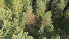 Aerial view of cutting wood by HeliDog_Aerials, Part 2 Stock Footage