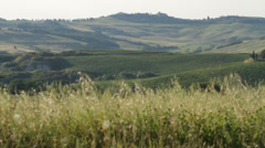 Val d'orcia grain - pienza - flat Stock Footage
