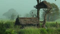 Sri Lanka-Lone peacock on roof in rice field-3 Stock Footage
