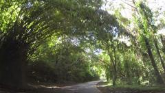 Drive POV El Yunque Rainforest National Park HD 0232 Stock Footage