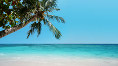 Palm tree and crystal clear waters of exotic tropical sea Stock Footage