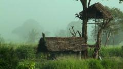 Sri Lanka-Lone peacock on roof in rice field-2 Stock Footage