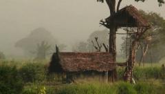 Sri Lanka-Lone peacock on roof in rice field-1 Stock Footage