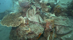 Nylon bags and other discarded human garbage permanently tangled onto coral reef Stock Footage