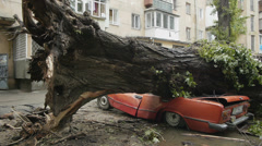 Old Soviet red car called Zhiguli crushed by a large tree during a hurricane. - stock footage