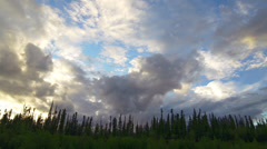 Alaska Black Spruce Forest Skyline Clouds Time Lapse Stock Footage