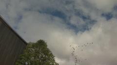 Flock Of Birds Zoom In Stock Footage