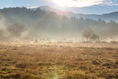 Stock Photo of fog on meadow